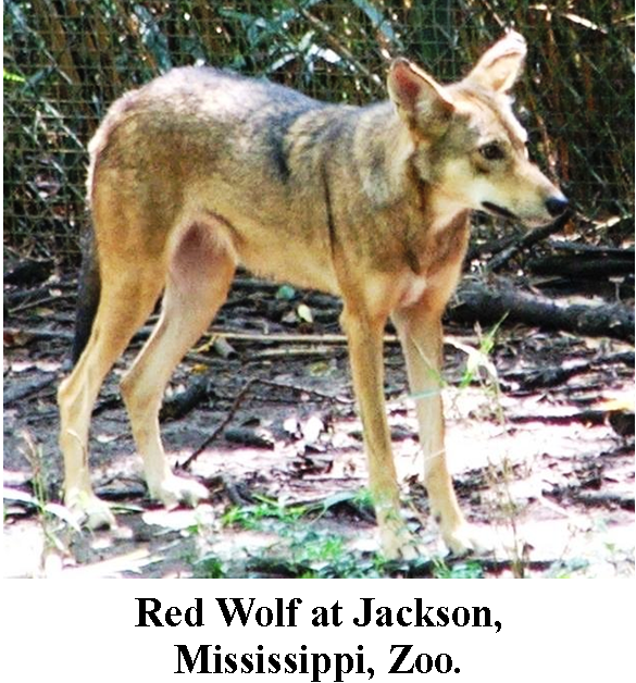 Red Wolf, Jackson, Mississippi, Zoo